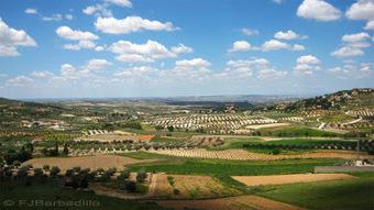 El último rincón: APUNTES DEL PAISAJE: campiña del sudeste madrileño | Nuevas Geografías | Scoop.it