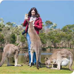 Business class flights to Australia | Tour and Travel | Scoop.it