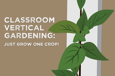 Simplify Your Classroom Garden, Make Life Easier - Bright Agrotech | Vertical Farm - Food Factory | Scoop.it