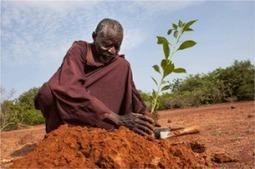 L'homme qui a arrêté le désert | Courant Positif | Kiosque du monde : Afrique | Scoop.it
