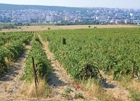 Russia to almost double vineyards by 2020 | Vitabella Wine Daily Gossip | Scoop.it
