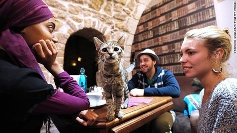 Cat-ching! Cat cafes take over world - CNN   gamuchain   Scoop.it