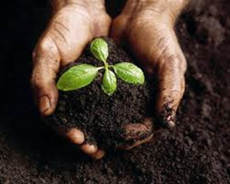 Is human waste OK to use for compost or fertilizer?   Brian's Science and Technology   Scoop.it