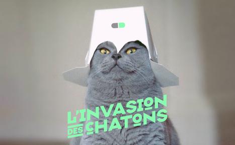 Les Lolcats dans la communication | Art contemporain et culture | Scoop.it