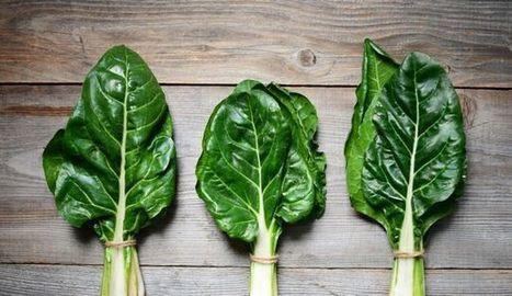 Tout ce qu'il faut savoir sur la blette ou bette: cuisine, saison, cuisson, bienfaits | MILLESIMES 62 : blog de Sandrine et Stéphane SAVORGNAN | Scoop.it