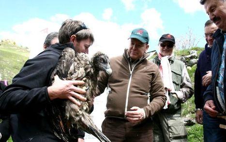 Des poussins barbus découvrent le Mercantour   Nature   Scoop.it