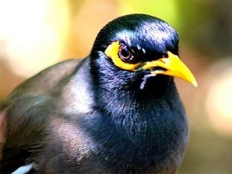 Bird Removed From Zoo Display For Hurling Expletives at Guests | Quite Interesting News | Scoop.it