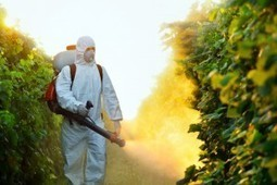 Pest control service is provided by Termite & Pest Control by Dale | Termite & Pest Control by Dale | Scoop.it