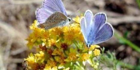 Liste rouge de la flore en France : plus de 500 plantes en danger   BIODIVERSITÉ - WWF   Scoop.it