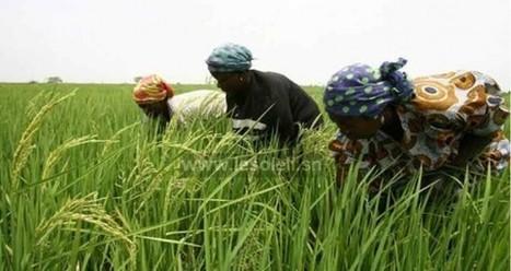 Sénégal : le warrantage, une solution pour le monde rural | Questions de développement ... | Scoop.it