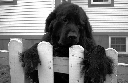 7 Cases of Animals that Committed Suicide | enjoy yourself | Scoop.it