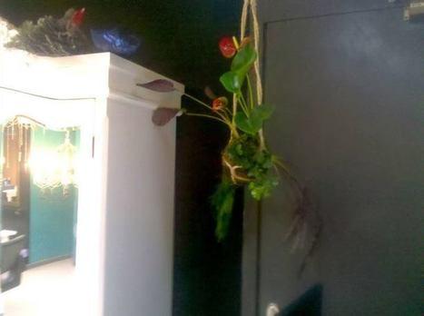 Untitled Album - Kokedama Air Gardens   Facebook   AirGardens   Scoop.it