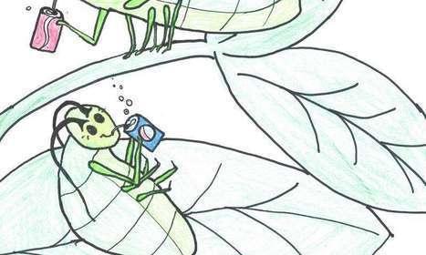 Pause estivale sur EntomoNews !   EntomoNews   Scoop.it