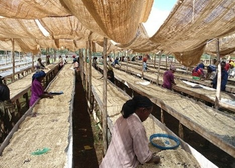 Saudi Billionaire-Owned Company to Invest $500 Million In Ethiopian Coffee   Coffee News   Scoop.it