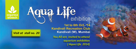 You all are cordially invited to attend aquarium exhibition (Aqua Life 2014) at Kandivali recreation club | Effective Biological treatment | Scoop.it