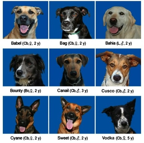 Dogs recognise other dogs in a crowd | For Pet Lovers | Scoop.it