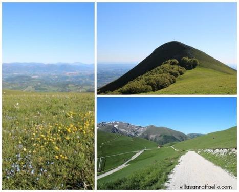 Sibillini mountain wild flower & bird | Le Marche Walk at Piani di Ragnolo | Le Marche another Italy | Scoop.it