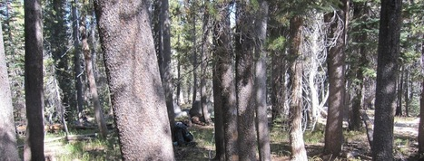 ESA 2013 Preview: Historical vs. Modern Conditions of Sierra ...   Ethnoecology   Scoop.it