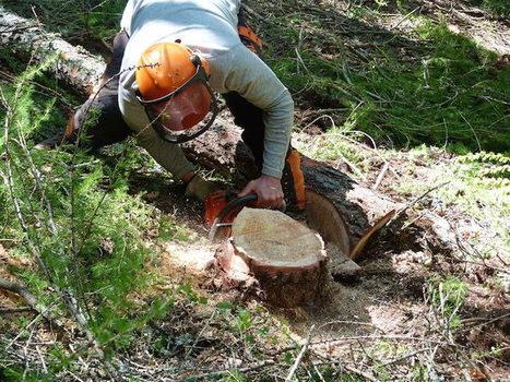 Avec les Amap Bois, une autre forêt est possible   Economie Responsable et Consommation Collaborative   Scoop.it