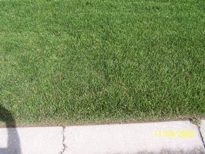 Some Tips for Lawn Care Tampa | Landscaping | Scoop.it