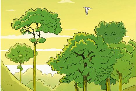 L'arbre miraculeux qui pourrait changer le monde - National Geographic | Ca m'interpelle... | Scoop.it