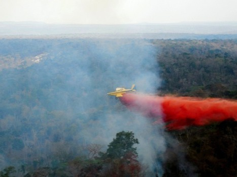Rapidly-spreading fire destroyed over half of the Amazon forest in the Brazilian state of Maranhão | Ecosystems at Risk | Scoop.it