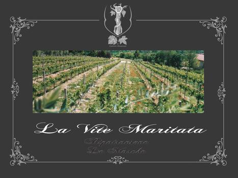La Vite Maritata, Ripatransone: artisan wines Le Marche | Wines and People | Scoop.it