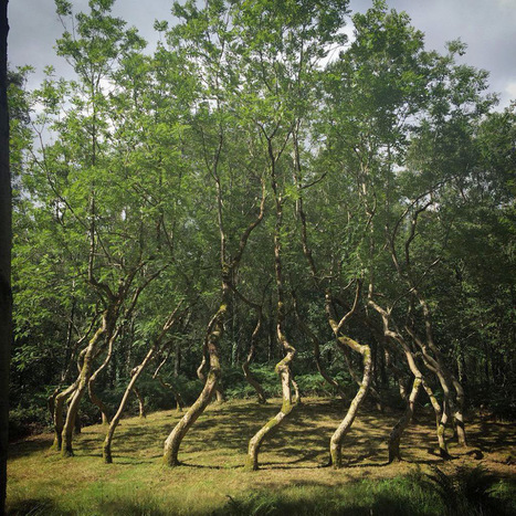 #Ash Dome: A #Secret #Tree #Artwork in #Wales #Planted by #David #Nash in 1977. #art #nature | Luby Art | Scoop.it