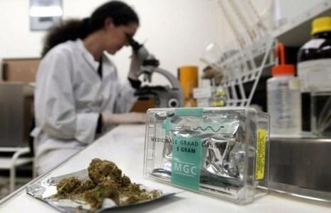 Wordt deze gemeente straks het mekka medicinale cannabis? | Drugsbeleid | Scoop.it