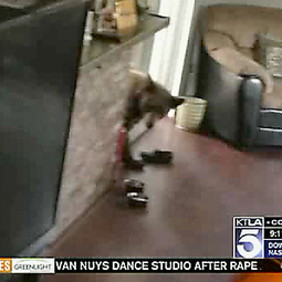Bear using doggy door breaks into home, chows on Chinese food | Radio Show Contents | Scoop.it
