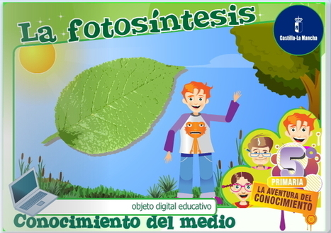 La fotosíntesis (Cuadernia)   Recull diari   Scoop.it