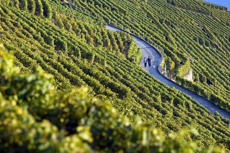 Oenotourisme : qui sont les touristes du vin ? - Le blog d'iDealwine sur l'actualité du vin | Route des vins | Scoop.it