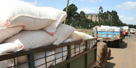 Kenya: Maize prices increase on the back of heavy rainfall | MAIZE | Scoop.it