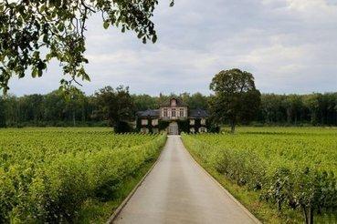 Natural Resistance, nouvel hommage au vin de l'auteur de Mondovino   Eloi ROUYER   Actualités   Le vin quotidien   Scoop.it