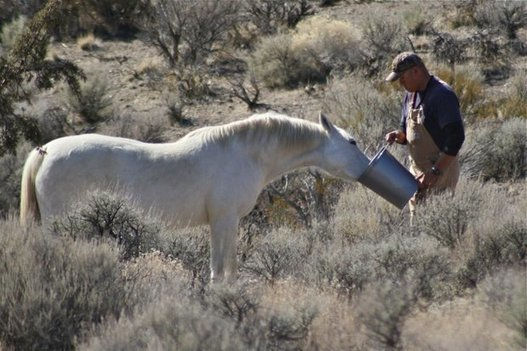 Wild horses in Nevada (Photos) | Horses