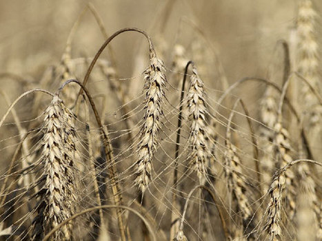 UN warns drought threatens food crisis as grain prices surge | Food Security | Scoop.it