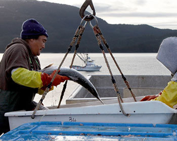 Copper River Seafoods to withdraw MSC support in 2014 | Aquaculture Directory | Seafood | Scoop.it