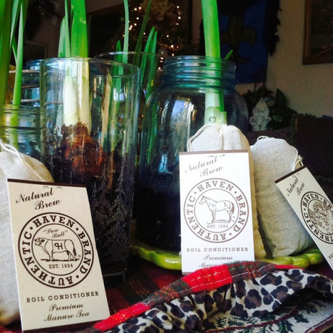 The (not always) Lazy W: Singing Praises for Manure Tea | Cottage Gardening | Scoop.it