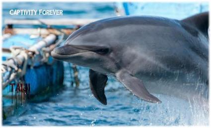 Action Alert Bottlenose Dolphins Wait for Death in The Cove | Dolphins | Scoop.it
