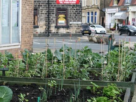 «Incredible edible»: un potager citoyen et gratuit pour tous? Pas si fous ces Anglais - Rue89 | Equitable & durable | Scoop.it