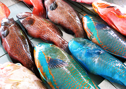Futurity.org – Is that fish wild or farmed? Possibly both   On the Plate   Scoop.it
