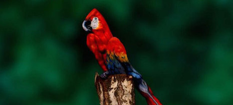 This Parrot Is Not What It Looks Like | 16s3d: Bestioles, opinions & pétitions | Scoop.it