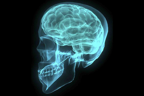 Primera reconstrucción y simulación digital de un fragmento de neocorteza cerebral | Uso inteligente de las herramientas TIC | Scoop.it