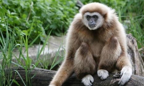 Humans: not smarter than animals (Science Alert) | Animal Sciences | Scoop.it