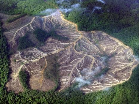 GRAND FORMAT. Les poumons de la planète en danger en 12 images | Art-nstuff | Scoop.it