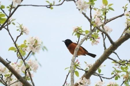 App Brings Big Data to Birdwatching | Social Foraging | Scoop.it