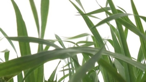 Development May Do Away With the Need For Fertilizers As Plants Made To Fix Own Nitrogen | Tracking the Future | Scoop.it