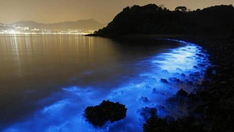 Magnificent blue glow of Hong Kong seas also disturbing | cyanobacteria | Scoop.it