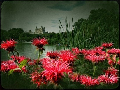 The Lake ~ Central Park NYC ~ Cat Morris | Appertunity's fun & creative iphone news | Scoop.it