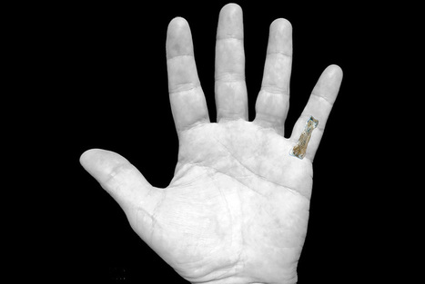 "Bone of little finger unearthed in East Africa reveals the oldest ""modern"" hand ever found 